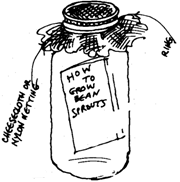 bean sprout jar